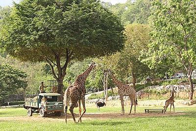 khao-kheow-open-zoo